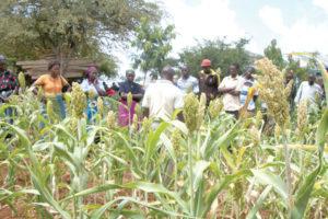 Farmers-visit-Josphat-Mavindya's-sorghum-farm-in-Mwingi-West